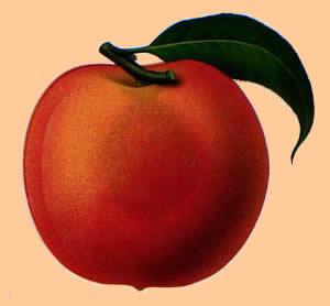 peach2-1